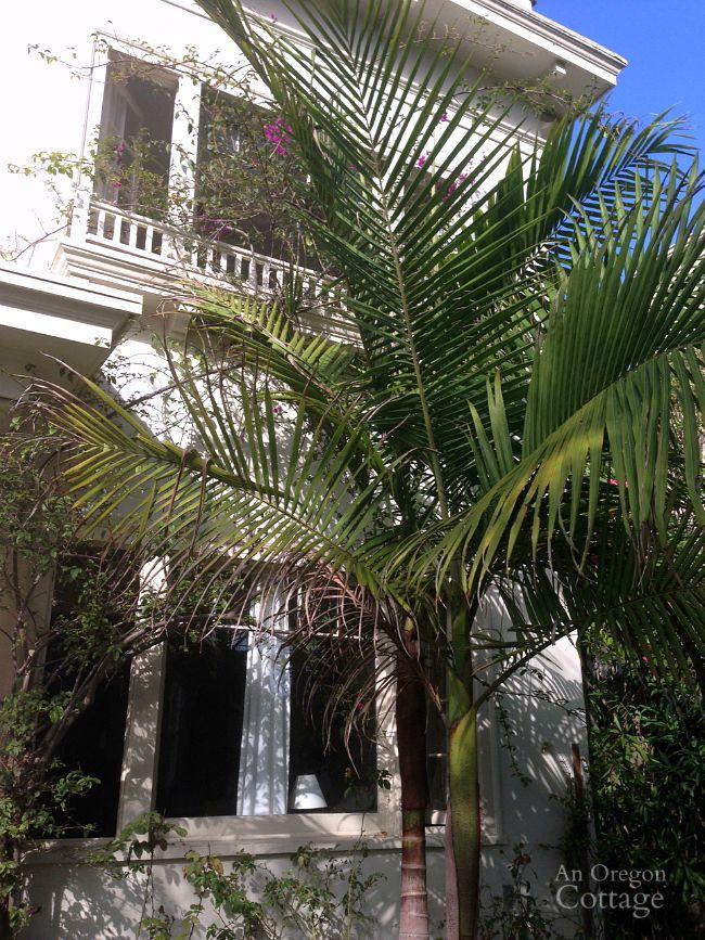 1930s 4-Plex-Palm Tree
