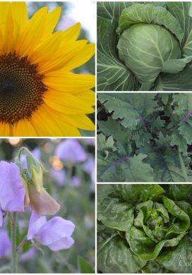 Tuesday Garden Party 7.07.15
