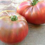Cherokee Purple Tomatoes in July