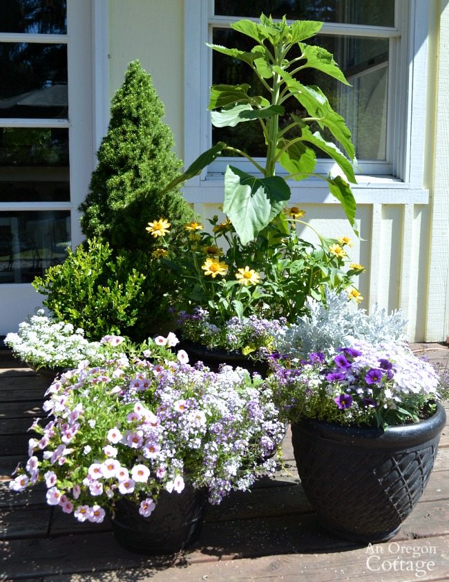 July 2 2015 Backyard Flower Containers
