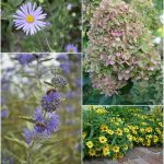 September Blooms via An Oregon Cottage