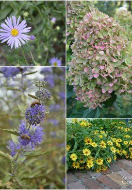 Tuesday Garden Party 9.08.15