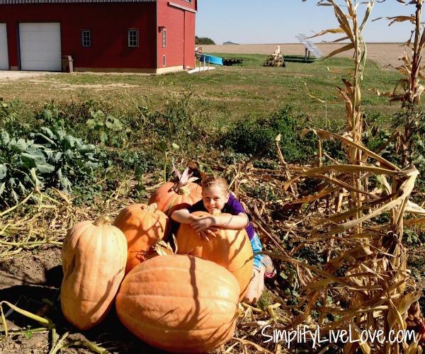 Dills Atlantic Giant Pumpkins from SimplifyLiveLove.com