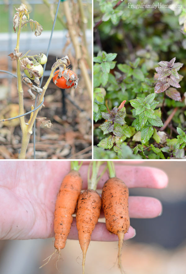 Fall Garden Update from Frugal Family Home