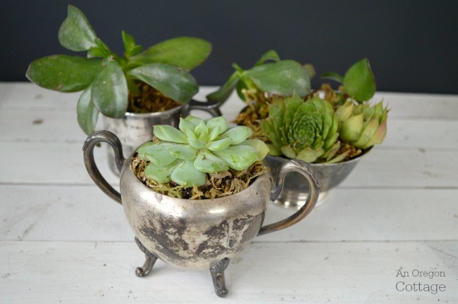 Succulents in vintage silver containers