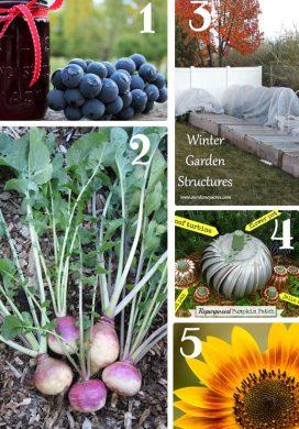 Tuesday Garden Party 10.06.15