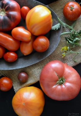 2015 Vegetable varieties reviewed including tomatoes, a bean, carrot, and broccoli | AnOregonCottage.com