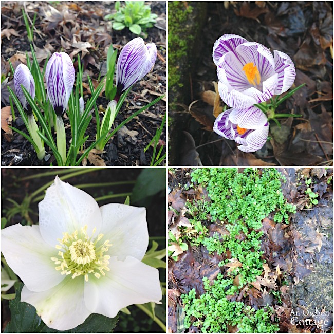 Three things: February 2016 blooms
