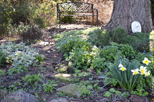 Shade garden in early spring with blooming brunnera