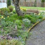 A Cottage Garden in March {Tuesdays In The Garden}