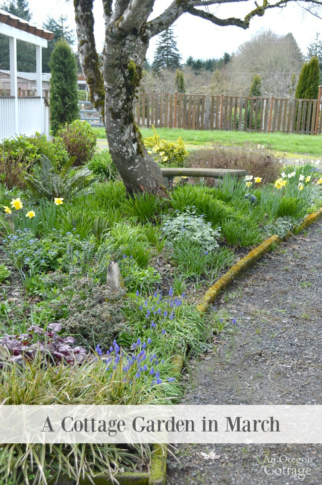 A cottage garden in march- what's blooming, what needs to be done, what to grow.