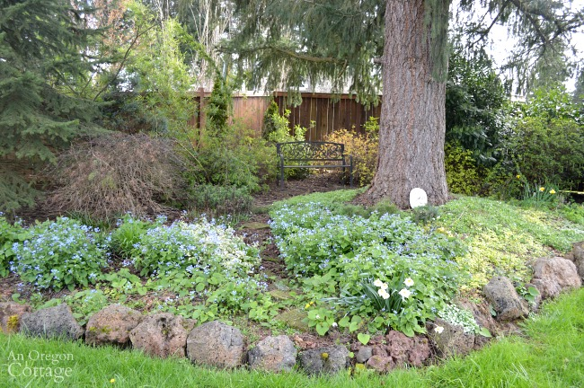 March cottage garden-shade garden