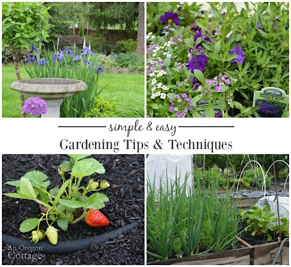 Simple Easy Gardening Tips And Techniques Tuesdays In