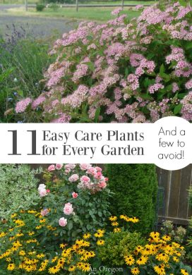 11 Easy Care Plants for Every Garden {And a Few to Avoid}
