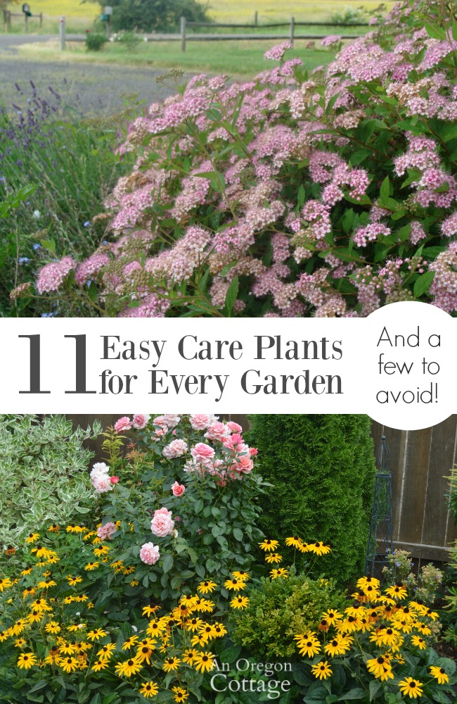 28 best 11 easy to care for 11 easy care plants for for Easy care outdoor plants and flowers