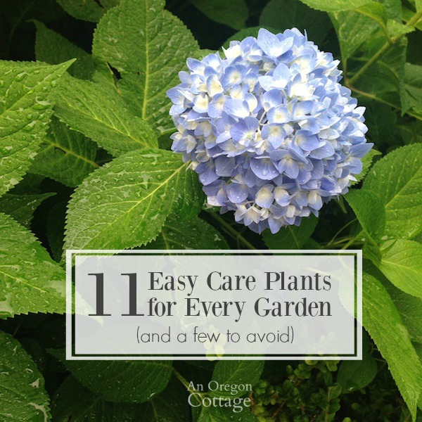 11 easy care plants for every garden and a few to avoid for Easy care landscape design