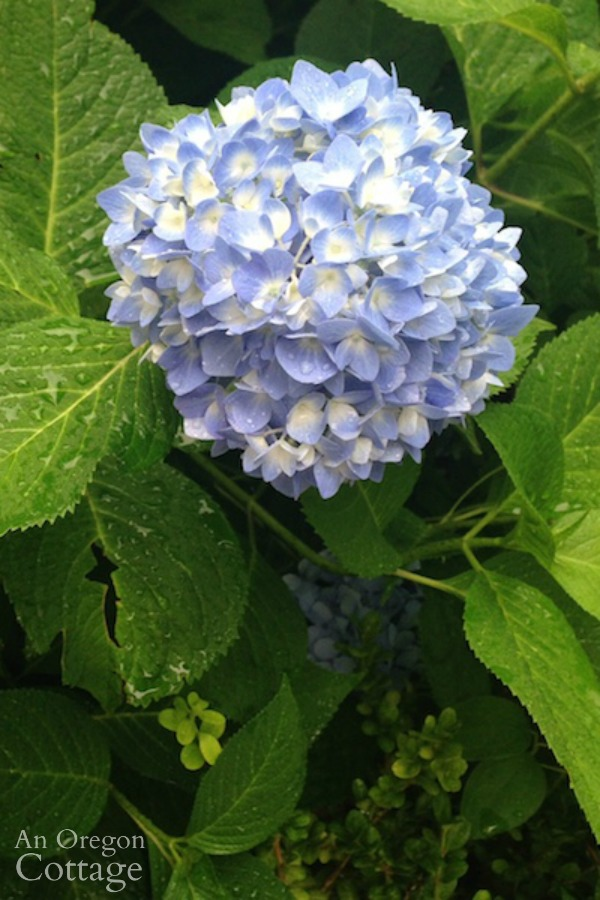 11 Easy Care Plants For Every Garden And A Few To Avoid An