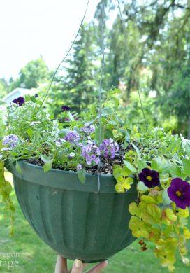 Newly planted hanging basket 5-16
