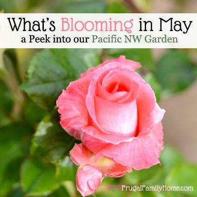 PNW May Blooms via Frugal Family Home