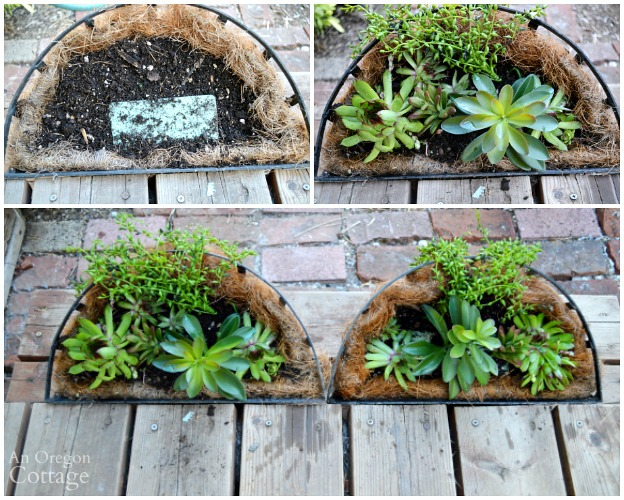 Quick Garden Shed Makeover-creating sedum window baskets