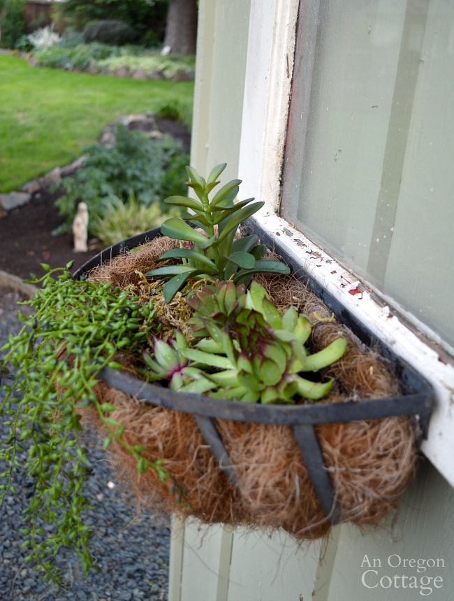 Quick Garden Shed Makeover-sedum basket on vintage window