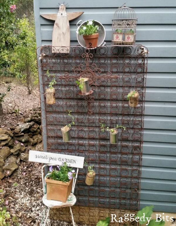 Upcycled garden: Rusty bedspring sweet pea garden
