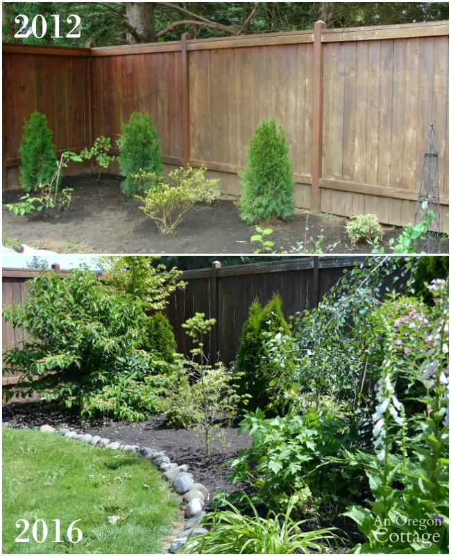 Side Yard Shrub Border Update_2016