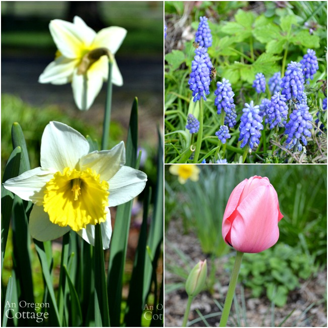 Top plants for every garden-spring blooming bulbs