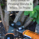 free ebook-guide to pruning shrubs