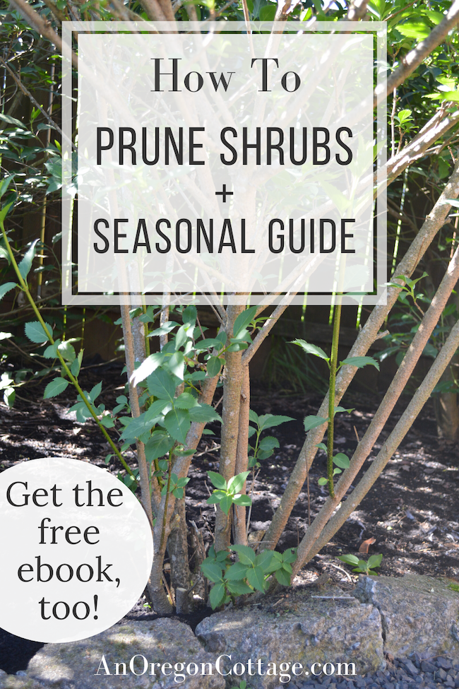 how to prune shrubs and seasonal guide
