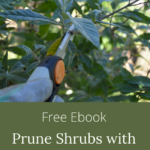 prune shrubs with confidence