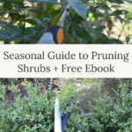 seasonal guide to pruning shrubs