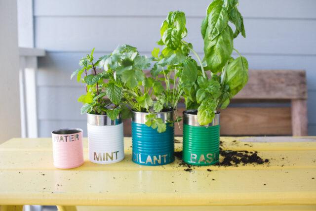 Upcycled garden: tin herb garden