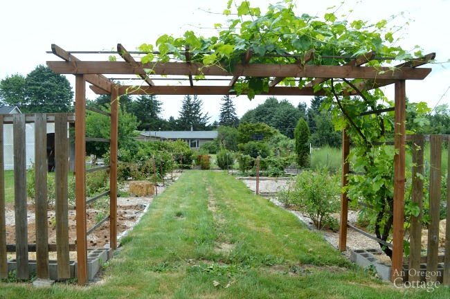 Grape arbor entry to a berry patch.