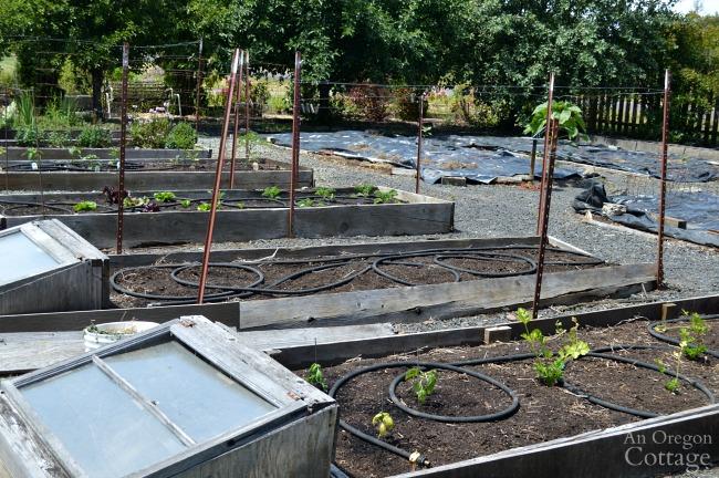 June 2016 bare bones vegetable garden