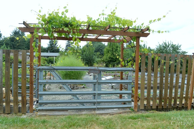 Garden Tour- Vegetable garden entry