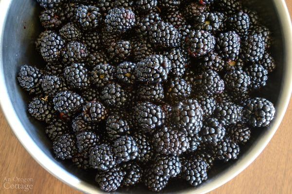 Bowl of Triple Crown Thornless Blackberries