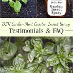 DIY Garlic-Mint Garden Insect Spray-reader testimonials and frequently asked questions-this is something every gardener needs!