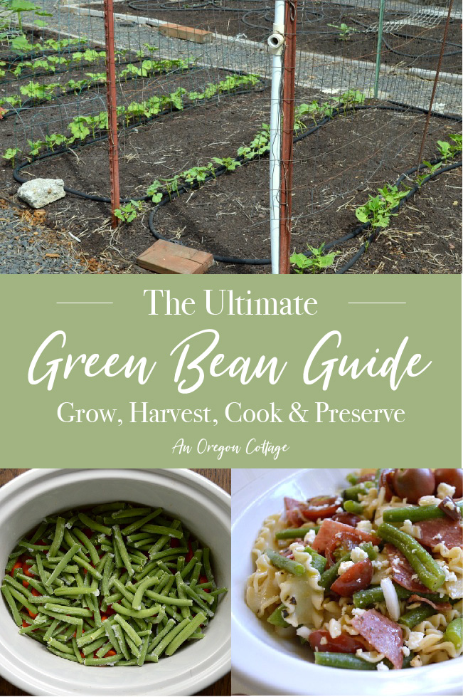 ultimate green bean guide pin image