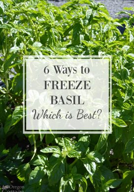 Freezing Basil Leaves 6 Ways: Which Is Best?