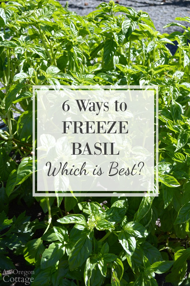Freezing Basil Leaves 6 Ways Which Is Best An Oregon Cottage