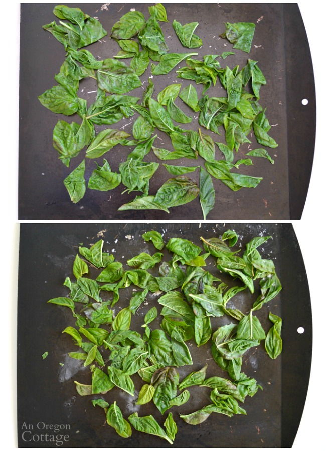 Freezing Basil Leaves-blanched whole
