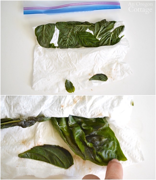 Freezing Basil Leaves-frozen in paper towel
