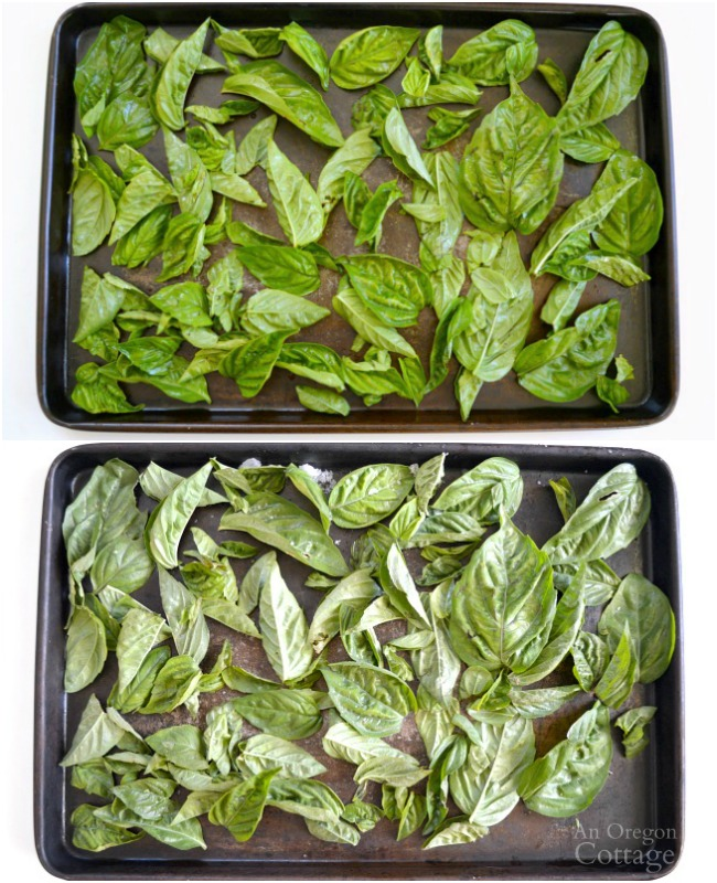 Freezing Basil Leaves-unblanched whole leaves