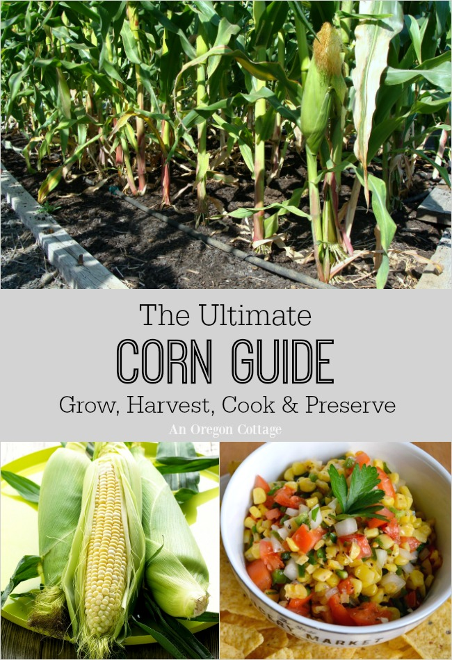 The Ultimate Corn Guide to grow and cook with sweet corn