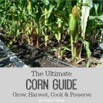 The Ultimate Corn Guide_400