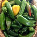 September hot pepper harvest from just 3 plants!