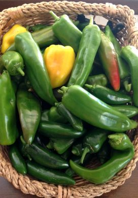 Three Things 9.10.16: Pepper Harvest, Sing Street, Good Bra + Links