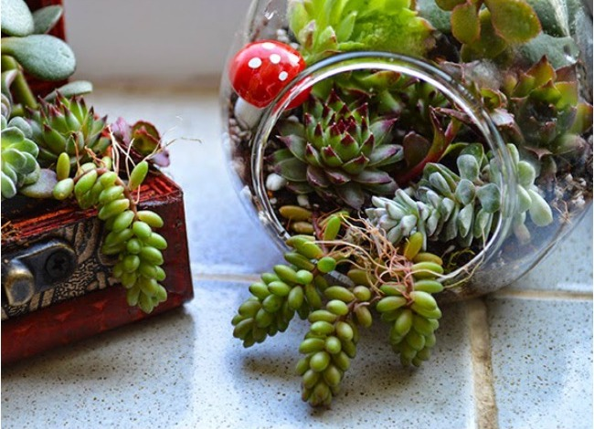 Succulent-Terrarium-Planter-via-Lovely-Greens