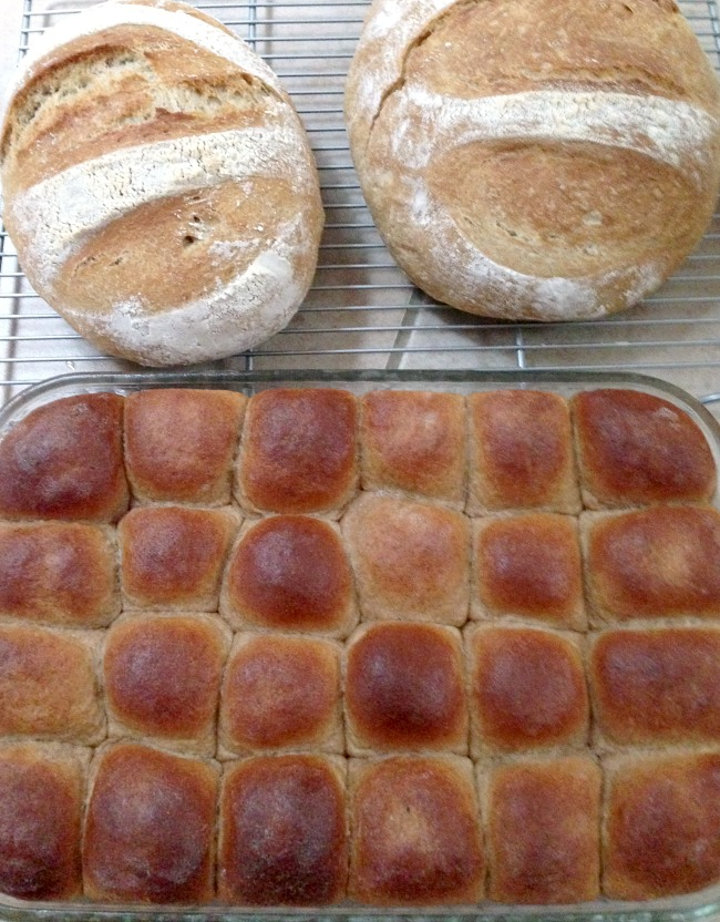 Soft whole wheat rolls and easy artisan bread loaves